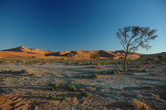 Lamparas Para Baño Turco: del desierto de ogadén envase bolsita de 80 gr precio unitario 5 70